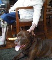 Sarge (dog) with Older Adult